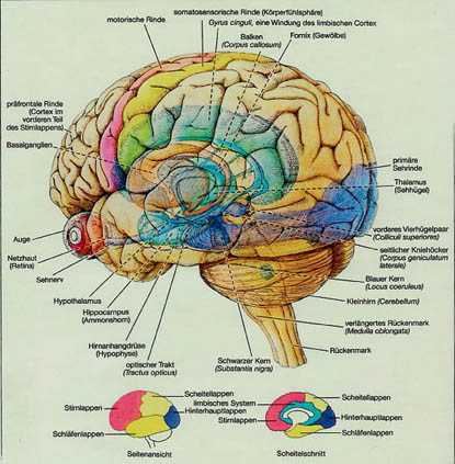 Geist und Gegenwart: Was macht Cannabis im Gehirn?